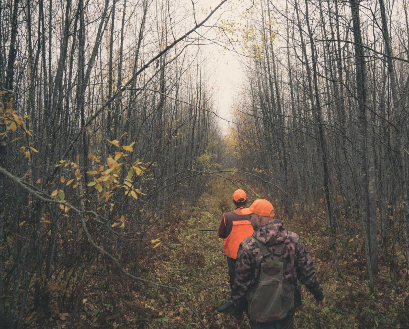 A group of bird hunters follow a dog through thick cover