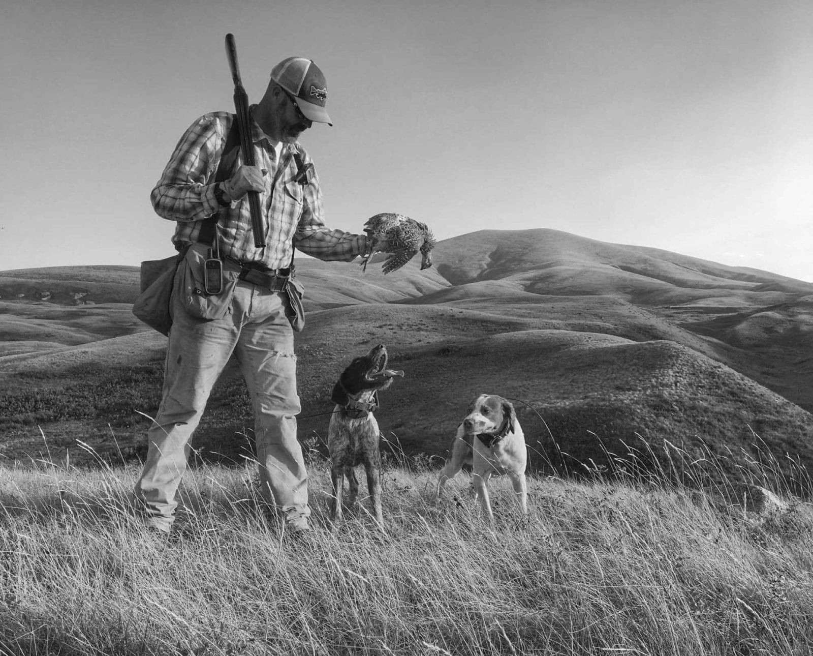 Ryan Busse his bird dogs and a sharp-tailed grouse