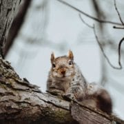 A squirrel looks at a hunter