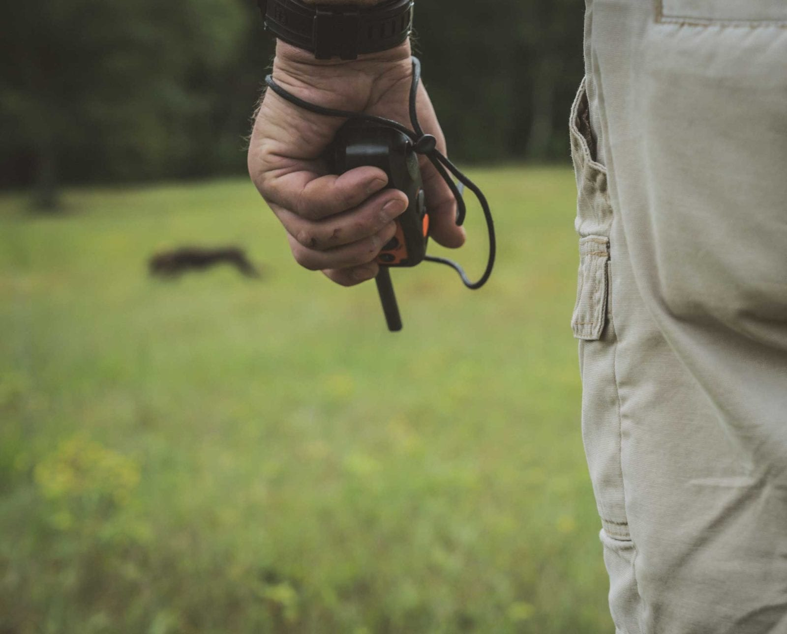 A bird dog trainer uses correct timing to correct a gun dog in the field.