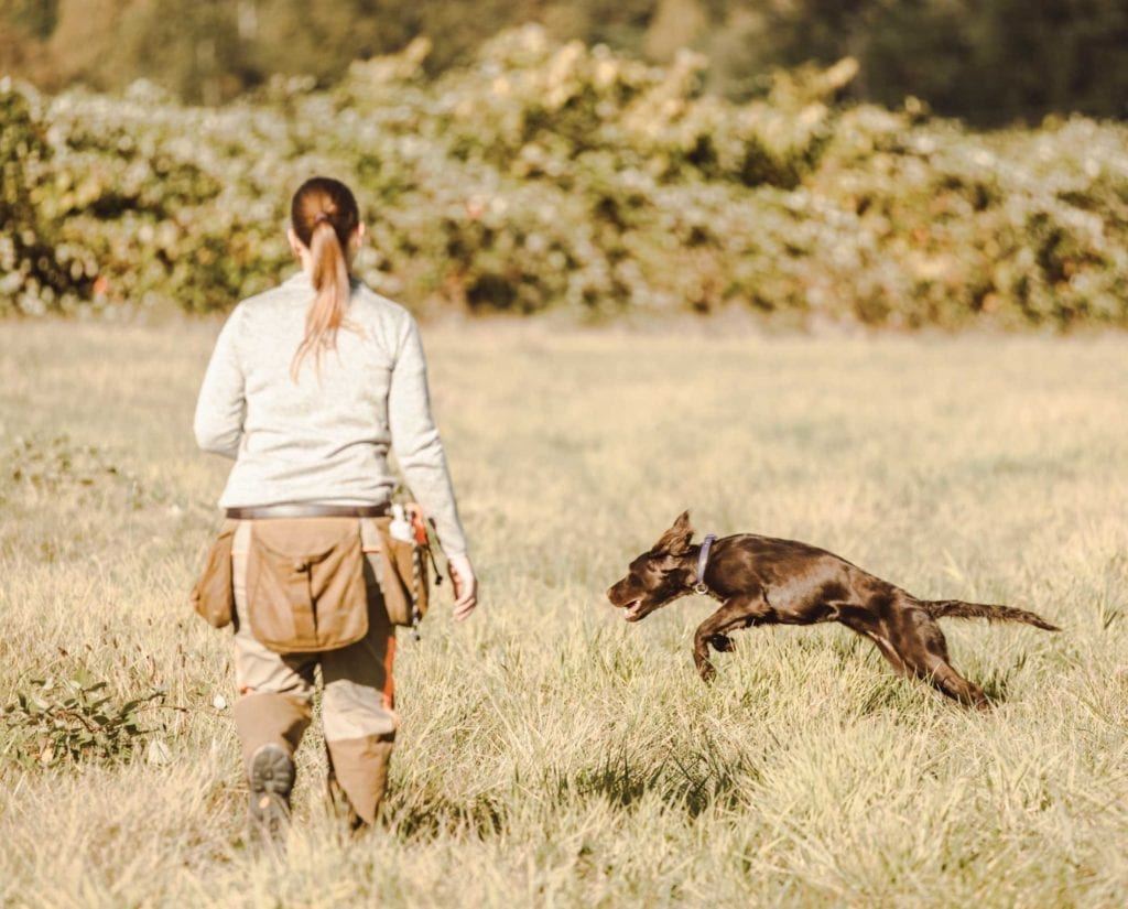 The author trains a dog in the field.