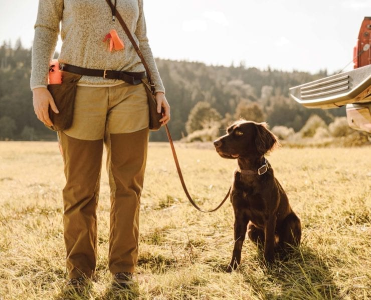 a versatile hunting dog sits next to a dog trainer