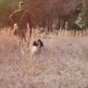 Todd Agnew trains a spaniel in a field for bird hunting.