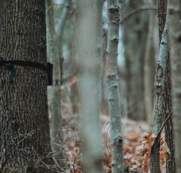 A turkey hunter checks trail camera pictures while scouting.