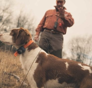 A dog trainer uses the whoa command on his American Brittany