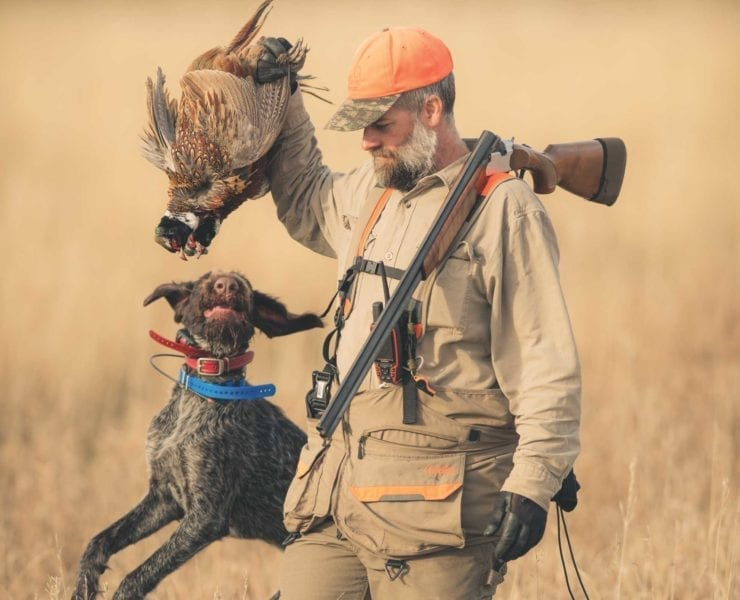 A bird hunter picks up to pheasant with his shotgun in hand