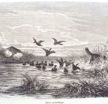 """""""Chasse au Badinage"""" A duck tolling retriever attracts ducks in this historic depiction of duck hunting"""