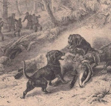 A historic image of teckels hunting game