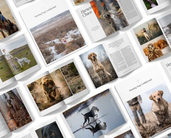 layout of hunting dog confidential magazine covers and pages